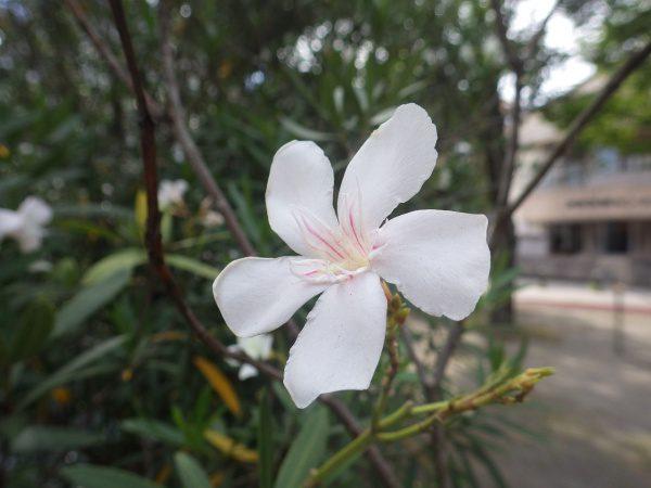綺麗な花には毒がある